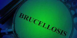 koinfekcje_boreliozy_brucelloza