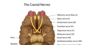 nerw bledny borelioza
