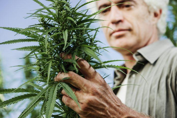 marihuana_leczenie_borelioza_cbd