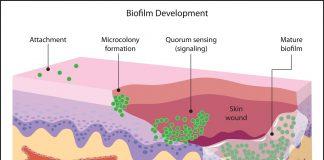 antybiotyki_bakterie_borelioza