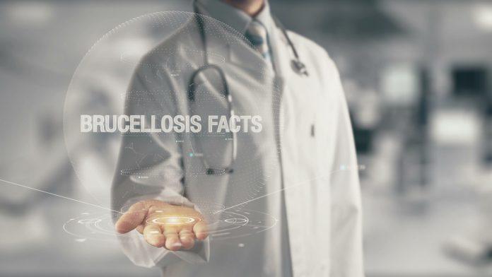 problem brucelozy koinfekcja boreliozy