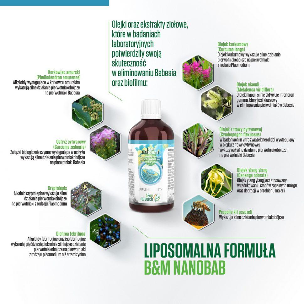 nanobab