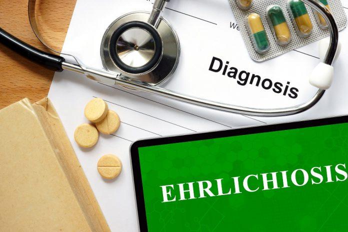borelioza_koinfekcje_objawy_leczenie_problemy_diagnostyczne